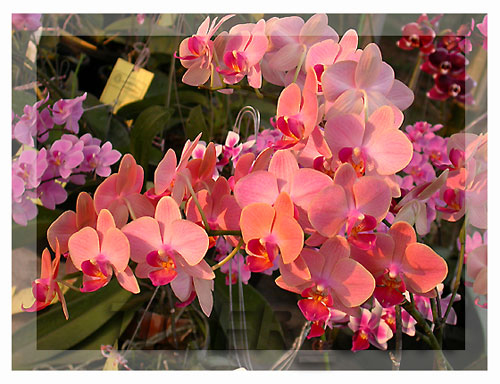 The Blooms Orchid Park Ratchaburi407