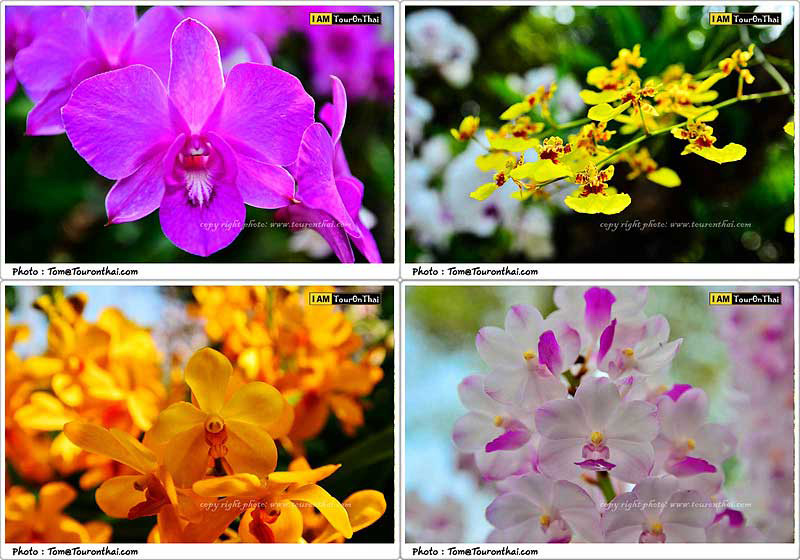 The Blooms Orchid Park Ratchaburi409